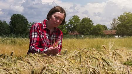 organic : Female farmer in wheat field examining growth of cereal crops, responsible organic farming