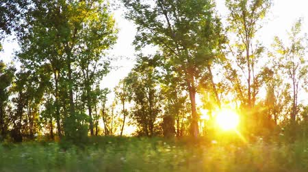 деревья : Driving a car through the woods, sunlight beaming through trees, side view from vehicle window