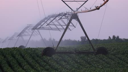 irrigação : Soybean field irrigation, watering cultivated crops in summer Vídeos