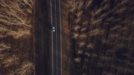 sérvia : Aerial view of cars on the road from drone point of view, roadway through deciduous forest in autumn