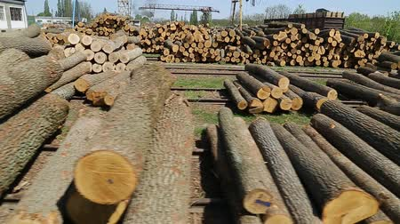 felling : cut doun trees on the sawmill Stock Footage