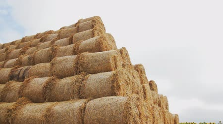 balé : Bales of hay in the field. big heap in the form of a pyramid