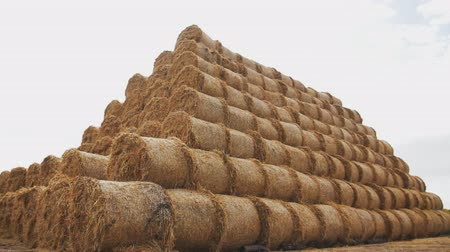 Round yellow bales of straw in the form of a pyramid. Camera tracking.