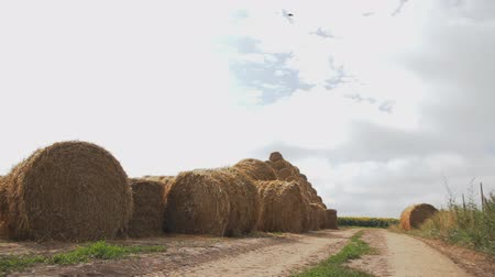 large round bales of straw on the field near the road. Camera tracking