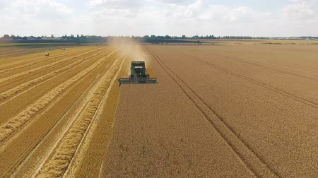 Harvester collects wheat on the field with storks