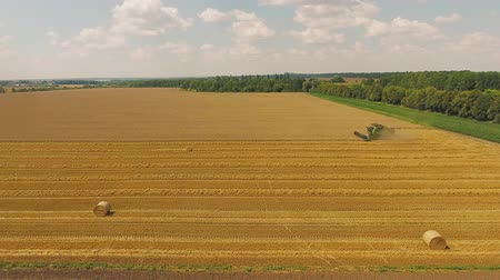 Field of yellow wheat. Aerial of tractor on harvest field