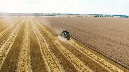 The combine travels through the wheat field and harvests