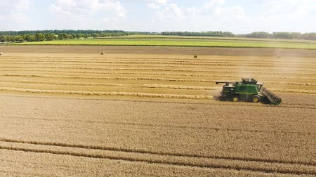 field of sunflowers and wheat. One Harvester Gathers Wheat Grains Dostupné videozáznamy