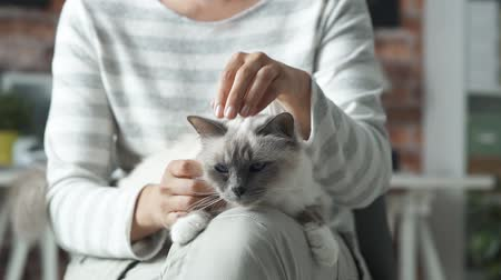 pussy : Woman sitting and holding her cat, she is cuddling Stock Footage