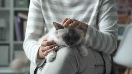 bichano : Woman sitting and holding her cat, she is cuddling Stock Footage