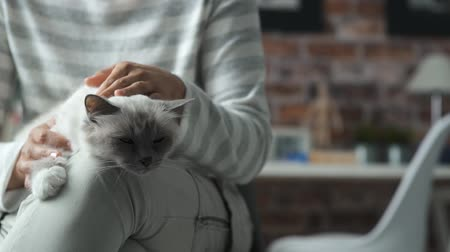 uykulu : Woman sitting and holding her cat, she is cuddling Stok Video