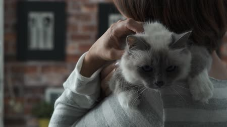 bichano : Woman holding a beautiful birman cat on her shoulder, she is cuddling and hugging it