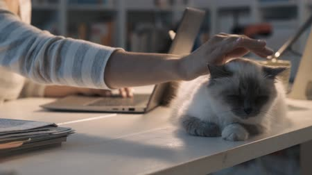 bichano : Beautiful young woman lying on the desk, pets and lifestyle concept Stock Footage