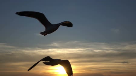 birds flying : Birds flying at sea in sunset