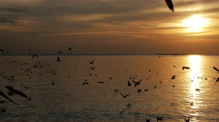 sea port : Group of birds flying at sunset