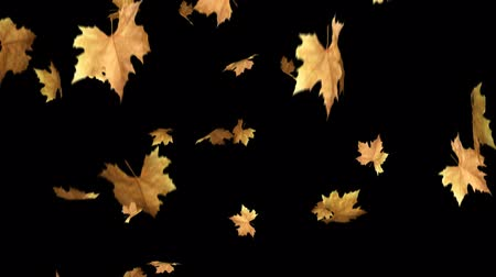 může : Autumn Leaves Falling With Alpha Channel Loop Clip. Can use this clip for background or overlays on your image, video project.