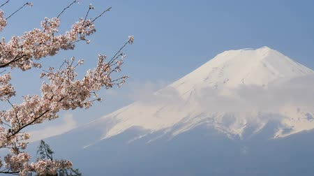 kiraz : Sakura cherry blossom with Mt. Fuji in spring season.