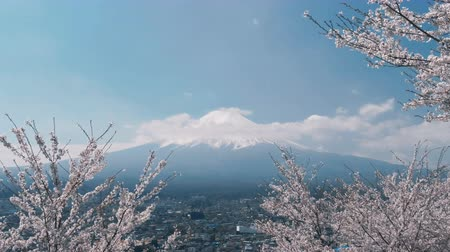 fuji : Japanese sakura tree with Mount Fuji.