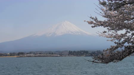 rügyek : Wide view of Mt. Fuji and lake kawaguchi with cherry blossom tree.