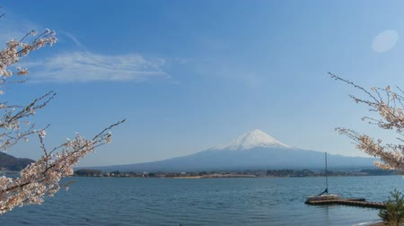 yoshino river : Mt. Fuji and kawaguchi lake with cherry blossom tree time lapse.