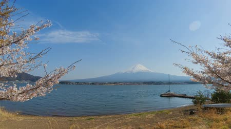 kiraz : Timelapse of Mount Fuji, Kawaguchiko lake in spring with sakura cherry blossom tree. Stok Video