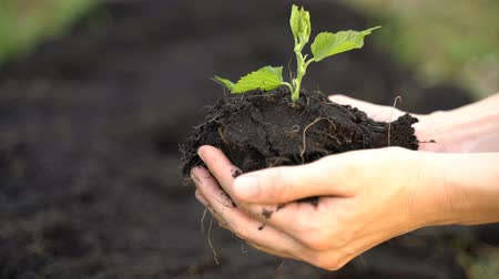 dżungla : Hand of gardener holding a seedling plant and soil Wideo