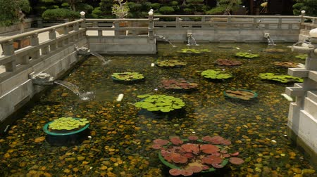 liliom : Lotus in pond with dragons heads a continuous stream of water into a pond