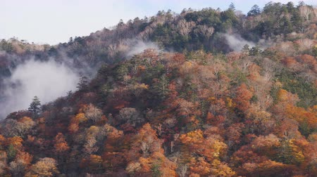 Fog moving along autumn tree on mountain in nature landscape. Stok Video