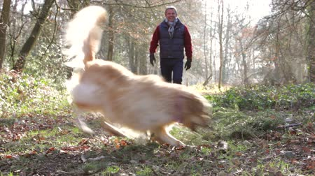 diferansiyel odak : Middle aged man with his dog in the woods playing fetch  Stok Video