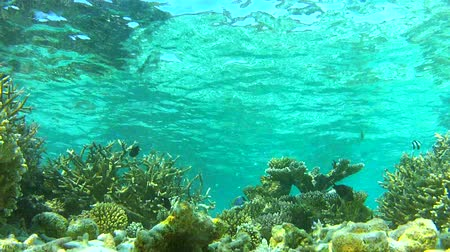 reef life : Time Lapse View Of Underwater Tropical Ocean Stock Footage
