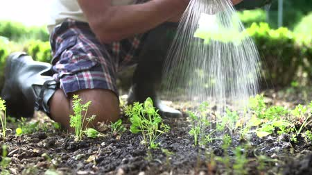self sufficiency : Close Up Of Man Planting Seedlings In Ground On Allotment Stock Footage