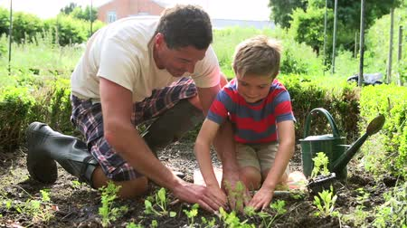 self sufficiency : Father And Son Planting Seedling In Ground On Allotment