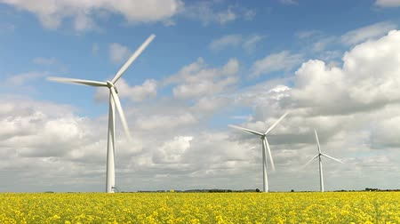 türbin : Group Of Wind Turbines In Field Of Rape