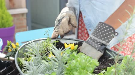 self sufficiency : Woman Putting Plants Into Containers In Rooftop Garden