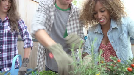 self sufficiency : Group Of Friends Planting Rooftop Garden Together
