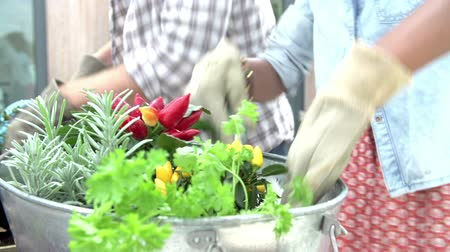 self sufficiency : Close Up Of Couple Planting Rooftop Garden Together Stock Footage