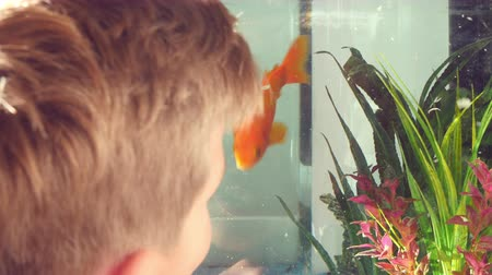 evcil hayvanlar : Boy Looking At Pet Fish In Aquarium