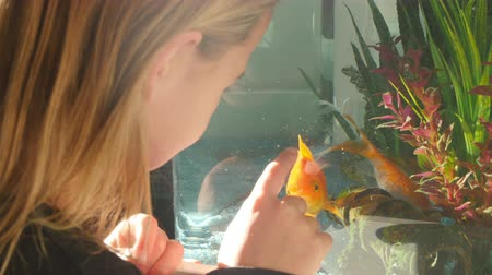 evcil hayvanlar : Girl Looking At Pet Fish In Aquarium