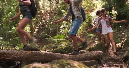 outdoor : Friends walking through a forest, balancing on a fallen tree