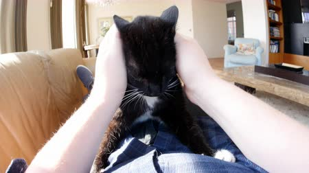 lying cat : Point of view of man relaxing and stroking pet cat