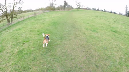 fetching : Point of view of throwing a stick for a dog in a park