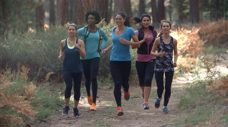 csak a nők : Group of young adult women running in a forest, slow motion Stock mozgókép