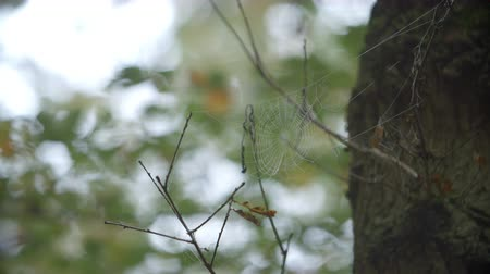 oxfordshire : Dew Covered Cobweb In Autumn Woodland