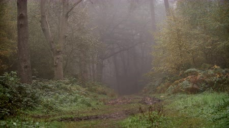 serene : Path Through Autumn Woodland On A Misty Morning