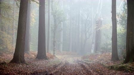 oxfordshire : Path Through Autumn Woodland On A Misty Morning