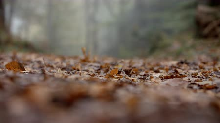 oxfordshire : Close Up Of Leaves On Path Through Autumn Woodland