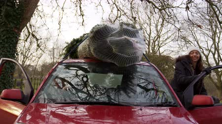 kirakodás : Couple Unloading Christmas Tree From Roof Of Car