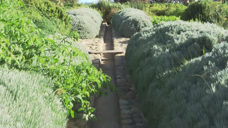 home grown : Path Through Gardens With Produce Being Grown On Allotment