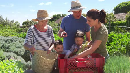 home grown : Grandparents With Adult Daughter And Grandchildren On Allotment Stock Footage