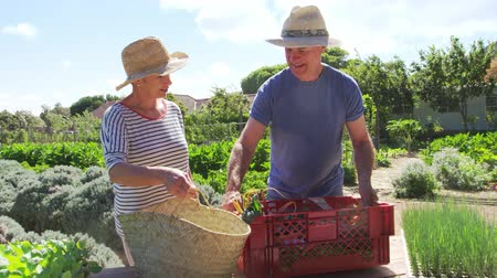 home grown : Senior Couple Harvesting Produce From Allotment Together